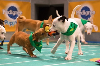 Puppy Bowl Action Shot